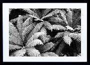 Framed Print - Fern Canopy