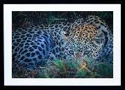Framed Print - Leopard