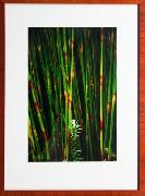 Framed Print - Reeds