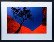 Framed Print - Uluru Bloodwood