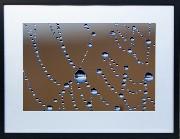 Framed Print - Web droplets