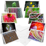 Small Things - Greeting Cards (Pack of 10)