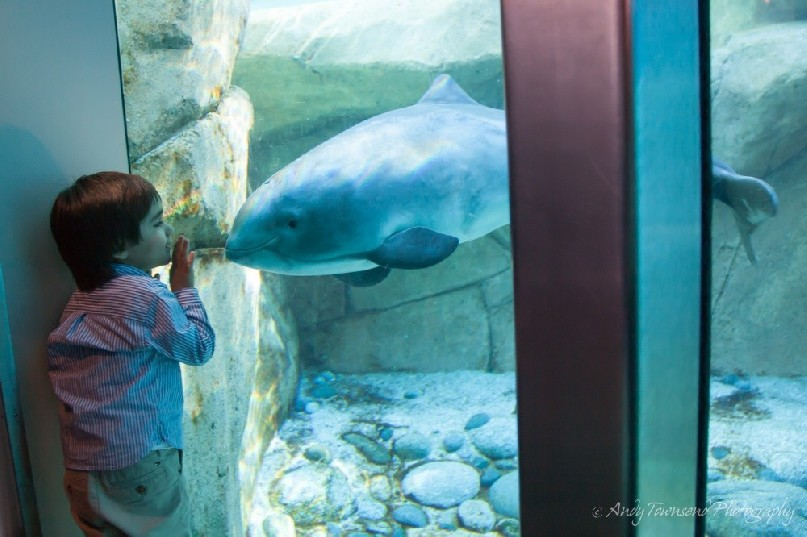 A young boy and harbour porpoise (Phocoena phocoena) pause to contemplate each other.