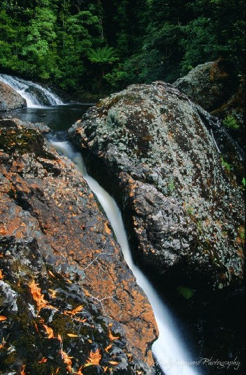 A small waterfall cascades down a narrow cleft in the rocks surrounded by rainforest.
