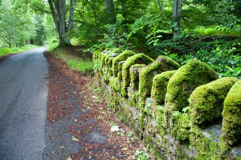 A wall of green moss coats a small stone bridge along a desserted Scotish lane.