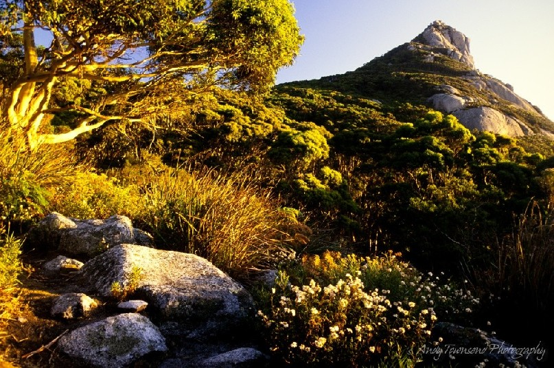The path leading up Mt Strezelecki passes through eucalyptus forest and granite tors, Flinders Island.