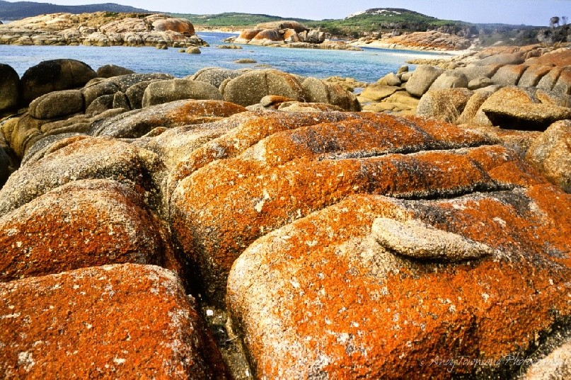Red lichen covers the rocks along a granite-lined bay on Flinders Island, Tasmania, Australia.