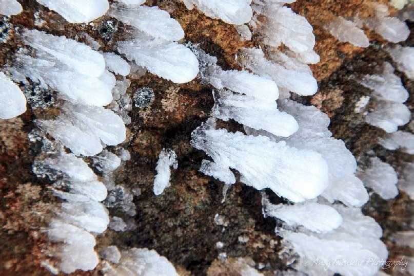 A close up of rime ice feathers attached to a dolerite boulder.