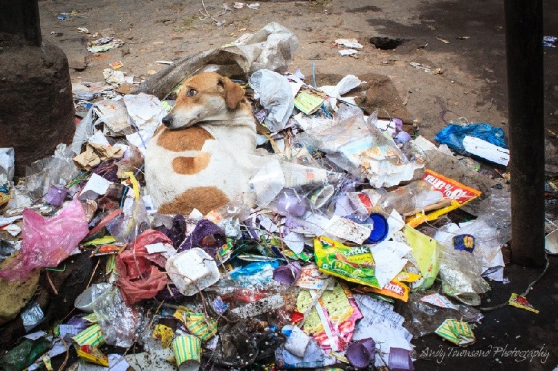 A dog turns to loook whilst resting on a rubbish pile in an alley.