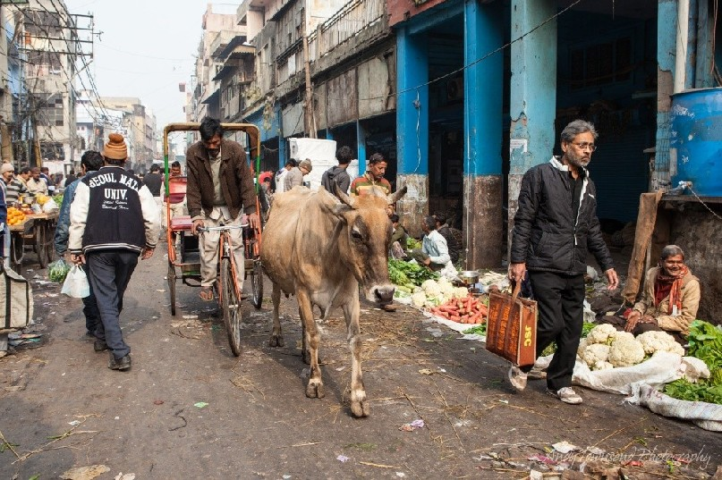 An Ongole cow makes it's way through a street stall with cycle rickshaw and people walking.