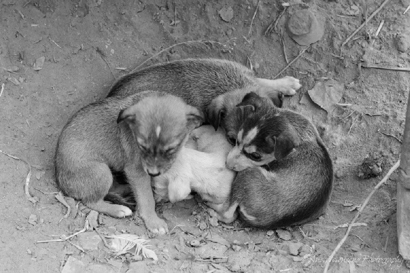 Young puppies huddle together on the dirt.