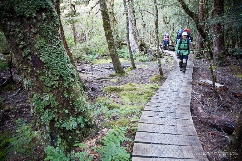 One of many boardwalks on the sensitive Overland Track, this one leading to the Labyrinth, Cradle Mountain / Lake St Clair National Park, Tasmania.
