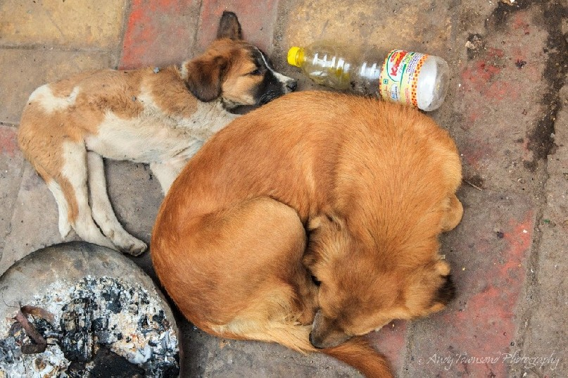 Two dogs lie curled up next to an empty drink bottle and fire bowl in Chandni Chowk.