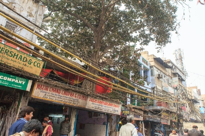 A tree growing on a second floor roof above a busy Delhi street adorned with chaotic electrical cables.