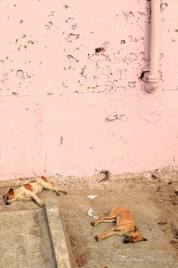 Two dogs lie asleep below a pink wall at the top of the spice market in Old Delhi.