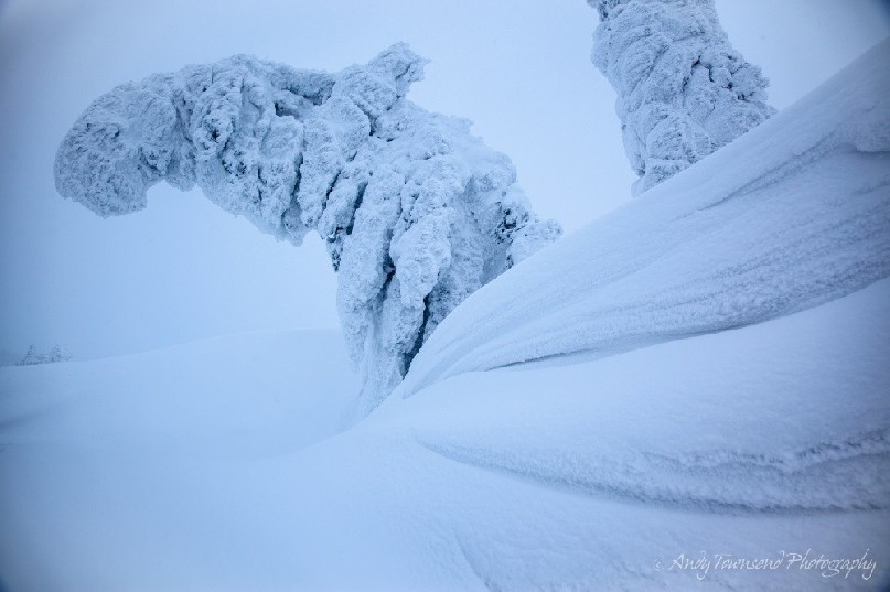 A bank of snow leads the eye to a curving, rime encrusted Maries' fir (Abies mariesii) tree in the Japanese Alps.