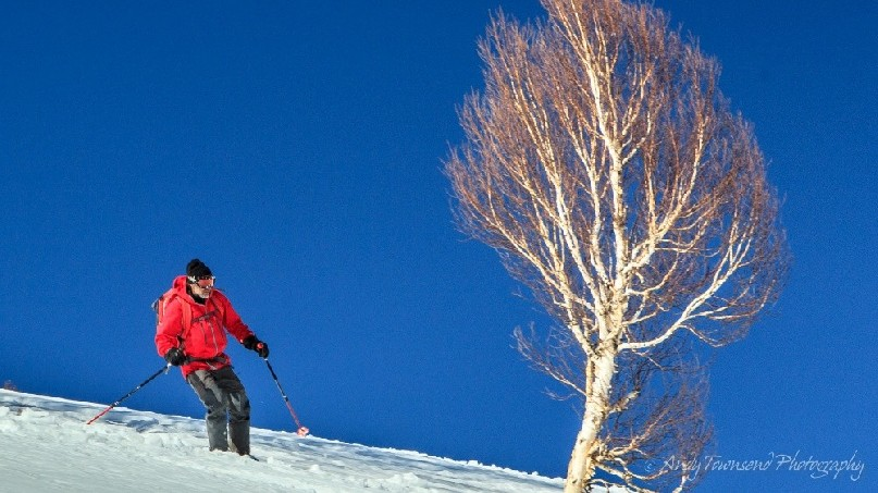 A skier in red jacket makes their way past a birch tree with blue sky beyond.