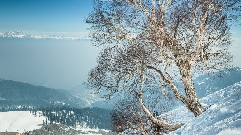 A small grove of Birch trees breaks the vista towards a fog-filled vallery and distant Himalayan range.