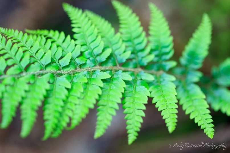 A close up of a fern frond.