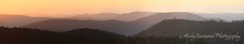 A view over eucalyptus forest to Chauncy Vale Wildlife sanctuary.