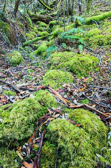 A dry creek bed covered in moss with long depth of field.