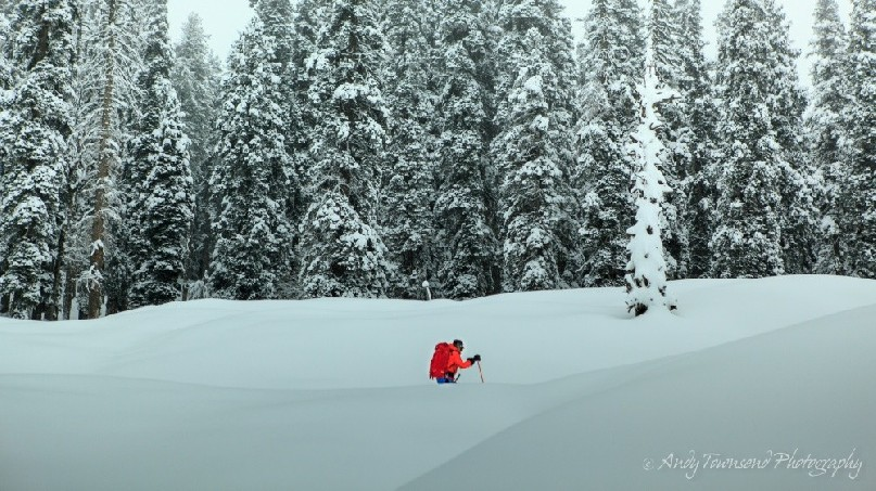 A skier skins up through a recent snowfall with snow-covered pine forest behind.