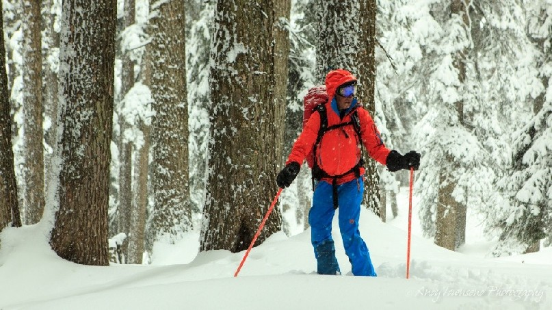 A skier pauses and looks to the right with snow-covered tree trunks behind.