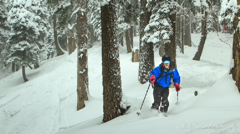 A skier weaves their way through snow-covered trees.
