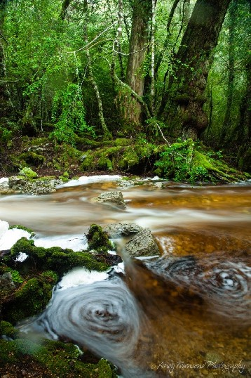 Water swirles at the edge of this rainforest creek near Cradle Mountain.