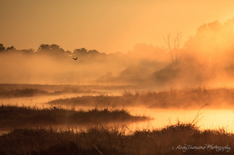 Sunrise over wetland with bird flying in the distance.