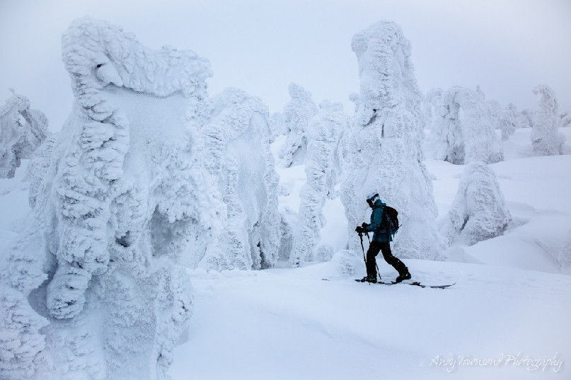 A skier moves through rime-encrusted 'snow monster' trees (Maries' fir -Abies mariesii) called Juhyo.