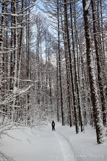 A skier makes their way along a narrow tree-lined path