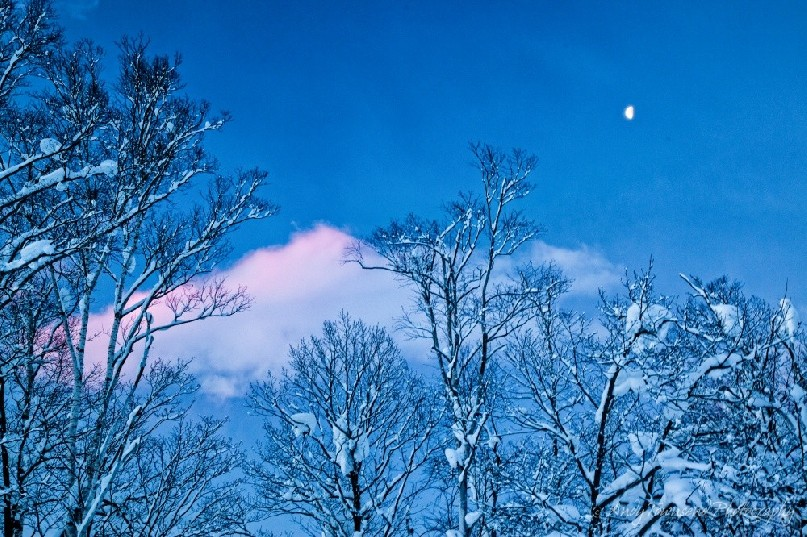 A half moon glows above snow-enveloped trees as a dawn light hits distant clouds