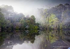 Tarkine Wilderness Area, Tasmania, Australia
