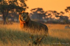 African Mammal Photographs