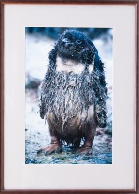 Framed Print - Hippy Penguin