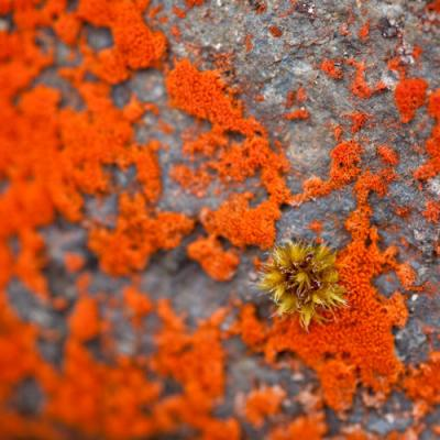 Framed Canvas Print - Lichen Detail
