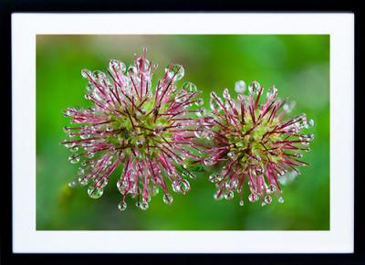 Framed Print - Buzzy Droplets