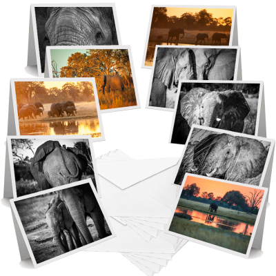 African Elephants - Greeting Cards (Pack of 10)