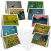 African Birds - Greeting Cards (Pack of 10)